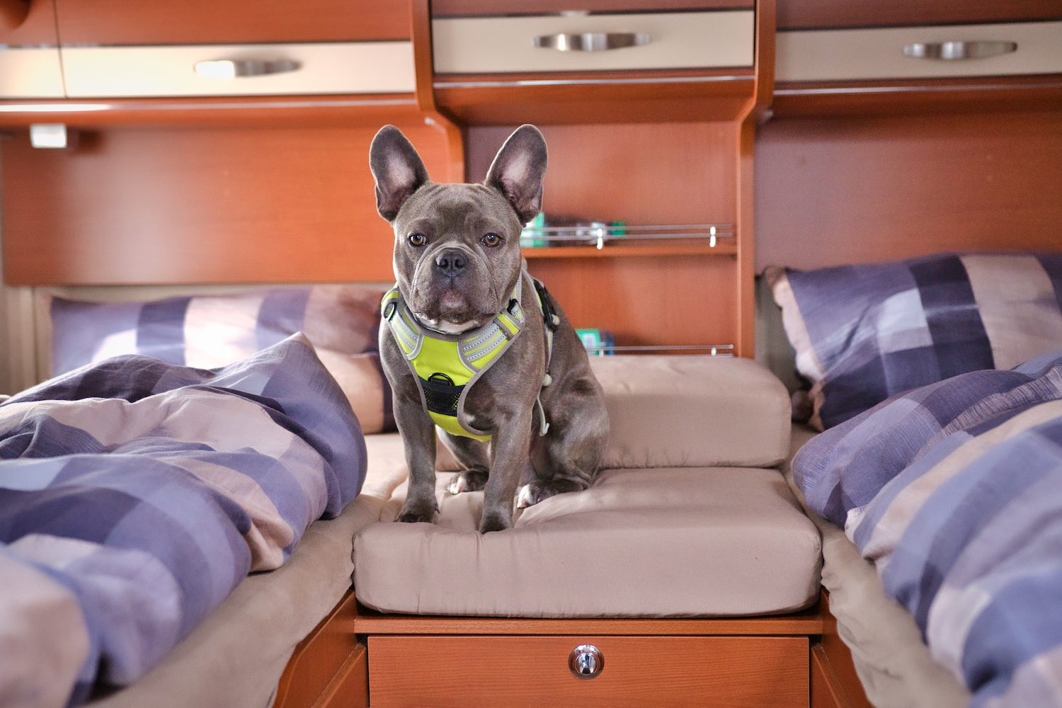 Finally a picture of our Trüffle in the camper bedroom