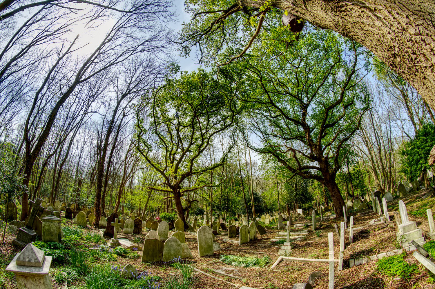 Gravestones as far as the eye can see: Highgate Cemetery