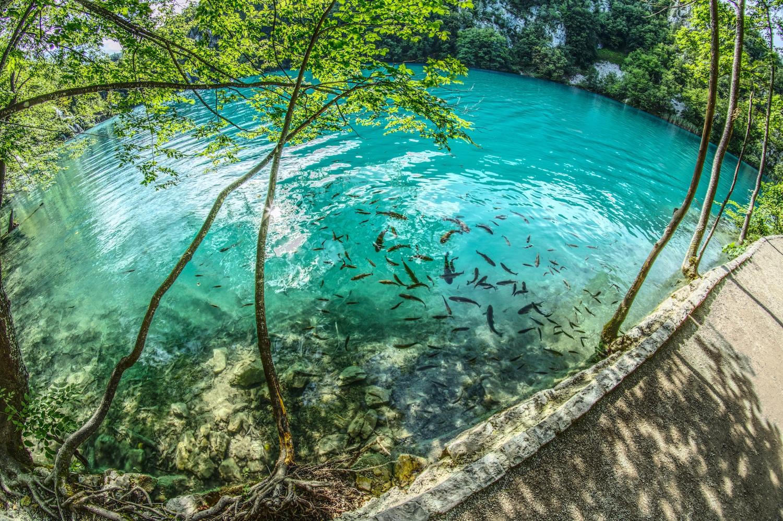 Fische im kristallklaren Wasser der Plitvicer Seen