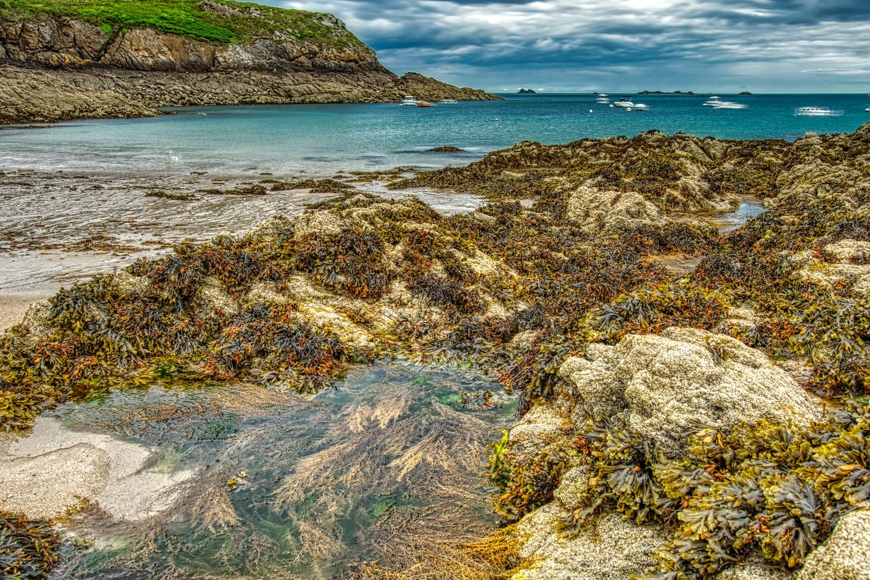 Trockengefallene Algen am Strand von Rothéneuf