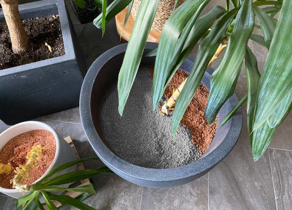 Die graue Alternative zum rötlichen Pflanzgranulat