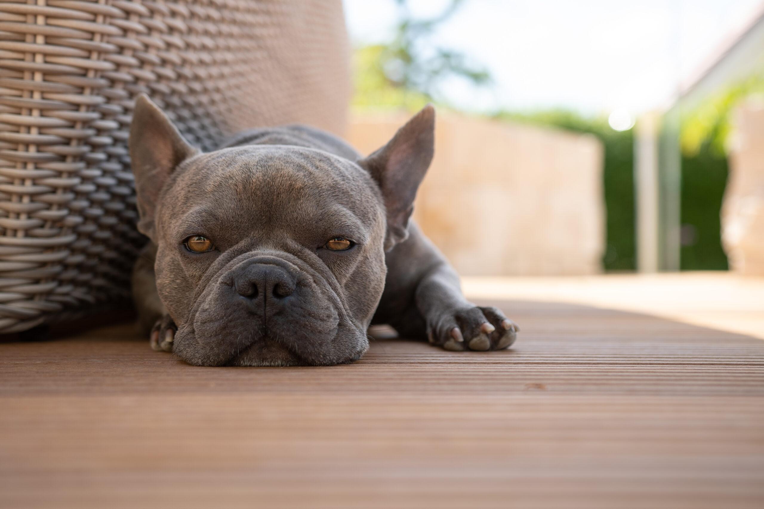 """""""Trüffel"""" liebt besonders die Schattenplätzchen unserer Terrasse."""