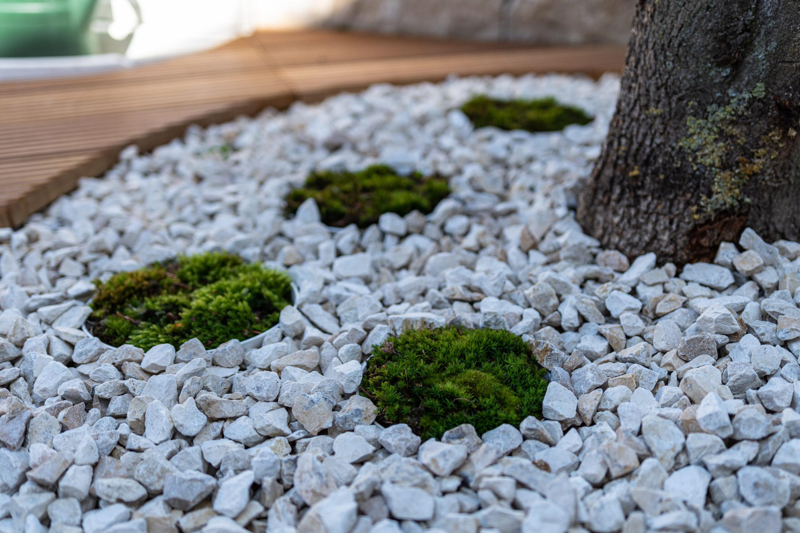 Runde Mooskissen verzieren die Steinbeete rund um die Bäume auf der Terrasse.