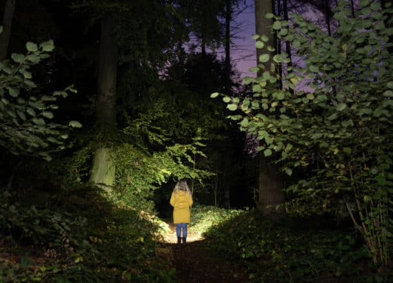 Scene photographed in the forest in the dark, illuminated with the Sofirn SP33 V 3.0