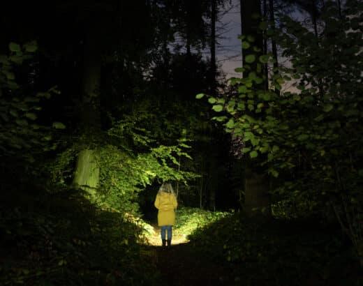 Im Wald bei Dunkelheit fotografierte Szene, beleuchtet mit der Sofirn SP33 V 3.0