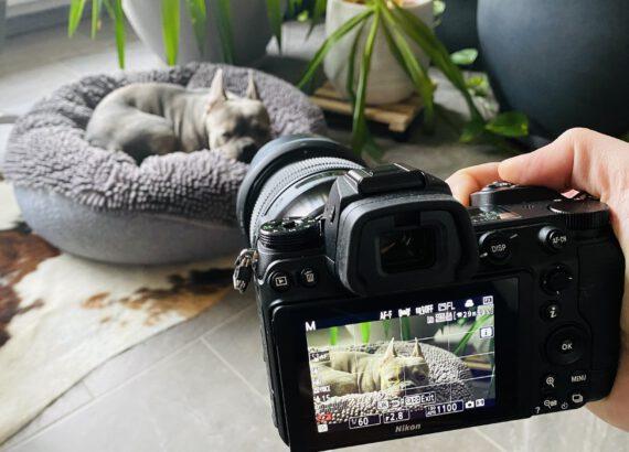 Wie man am besten 4K-Video mit Nikon Z6 und Z6 II aufnimmt