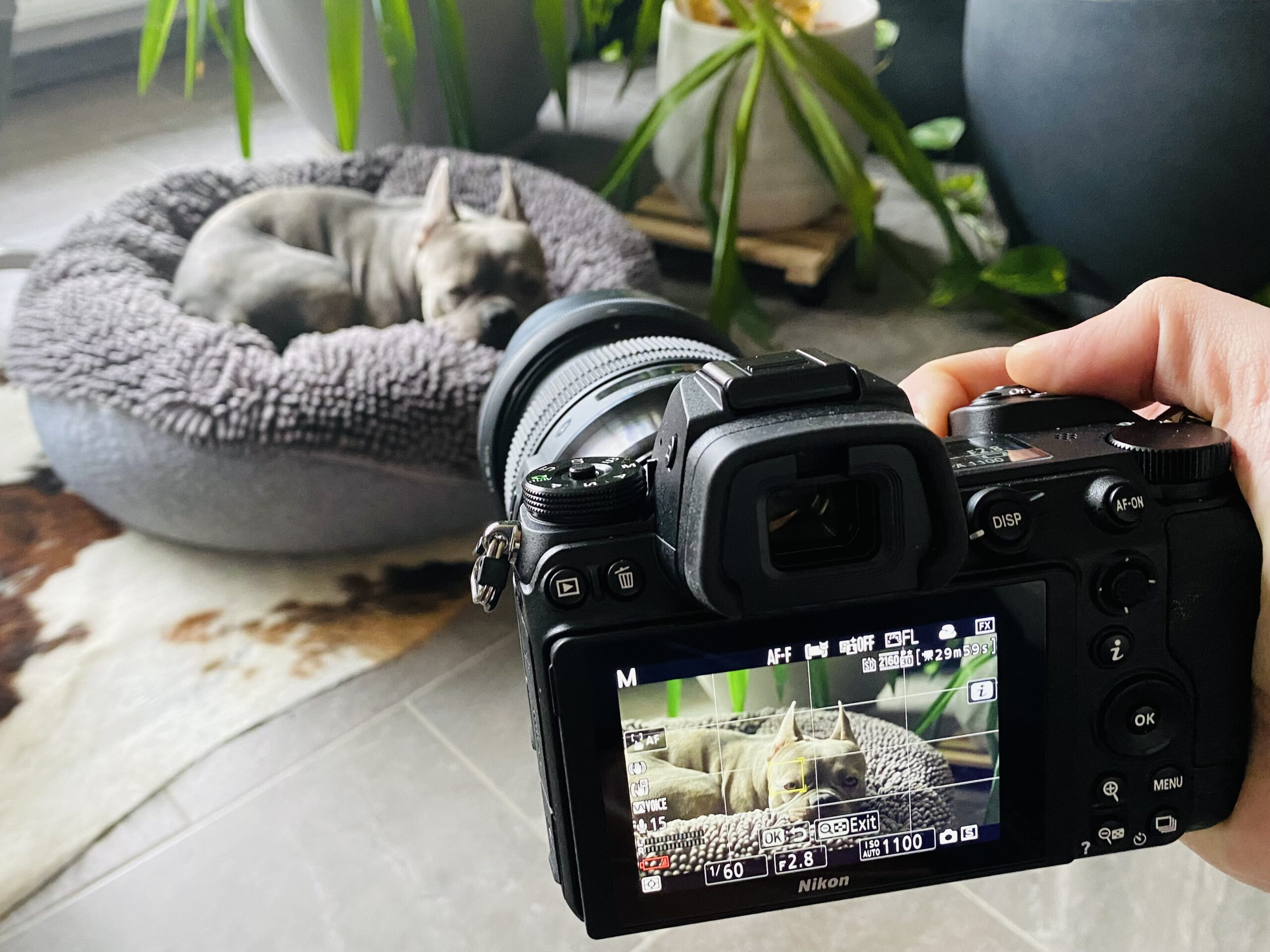 Nikon Z6 and Z6 II in camera 4K Video Settings – Best practise explained step by step