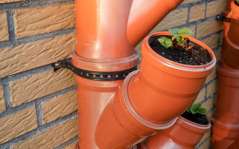 Mit einer Schelle lassen sich die Rohre mit den Erdbeeren an einer Wand befestigen.