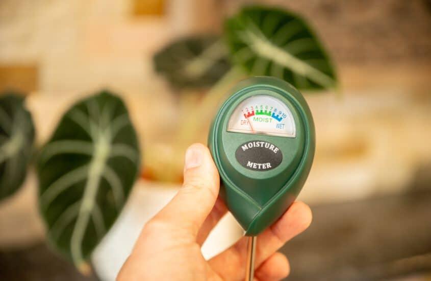 Bodenfeuchte bei Zimmerpflanzen zuverlässig ermitteln – Vergesst Gießanzeiger!