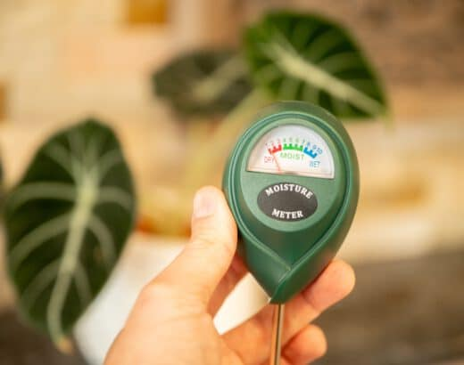 Soil tester for metering moisture in houseplants